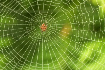 Spider web in the middle