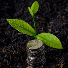 business finance. save money for investment concept plant growin