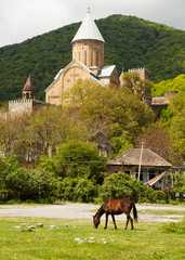 The horse and the Ananuri castle on the background.