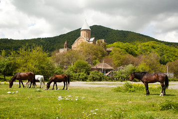 The horses and the Ananuri castle on the background.