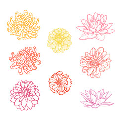 Set of flowers hand draw
