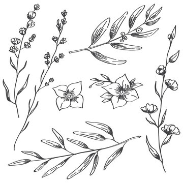 Jasmine flowers, lavender and natural branches hand drawn sketch