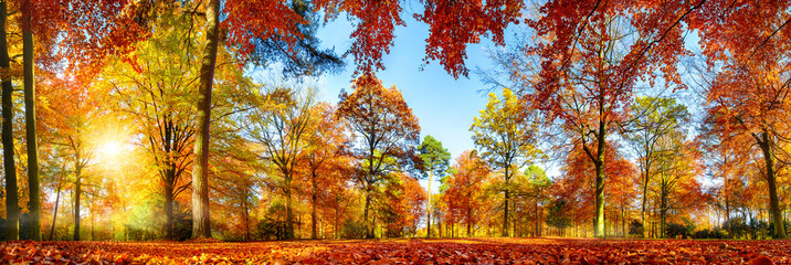 Wall Mural - Panorama von bunten Bäumen bei strahlendem Sonnenschein im Herbst