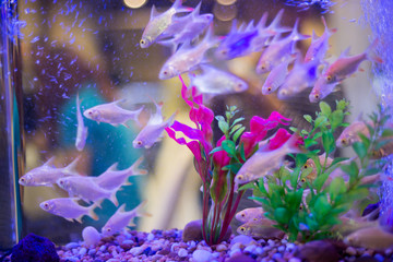 freshwater aquarium with green beautiful planted tropical