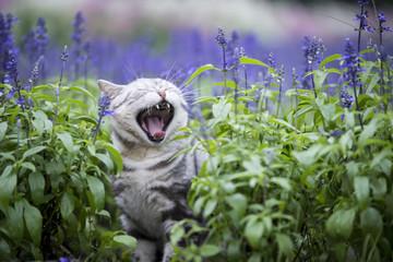 The cat lavender flowers