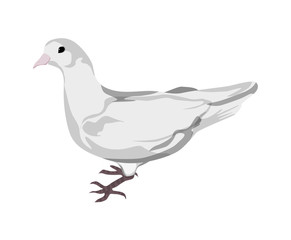 Isolated drawn dove. White pigeon symbol of love , piece and freedom. Beautiful creature for lovely art and decoration.
