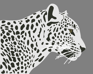 Ceylon leopard vector illustration. Side view, profile. Leopard