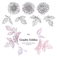 Hand-drawn ink dahlias. Collection contour buds, leaves dahlias.