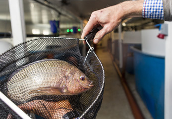 Cropped image of man holding fish in net