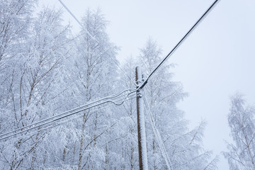 Snow covered power lines and trees