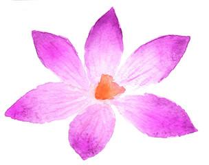 Pink flower in watercolor