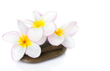 Plumeria flower on stone with white background for spa relax