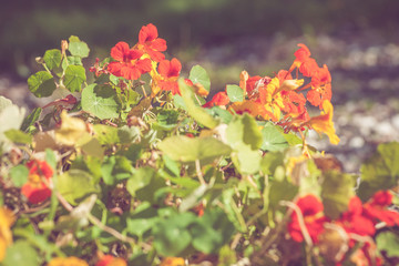 Summer flowers in red colors