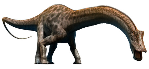 Buscar fotos: diplodocus