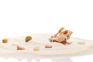 Seashell and sea stones on pile of beach sand