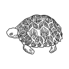 sketch shape turtle sea icon cartoon design abstract illustration animal