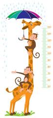 Giraffe and monkeys. Meter wall or height chart