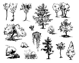 Hand drawn trees. Collection of cute sketches.