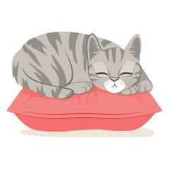Cute cat on a pink pillow sleeping happy having sweet dreams