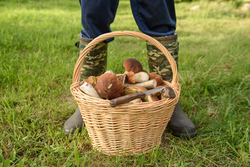 Cepes in a basket, Forest Mushroom
