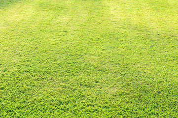 Green lawn in the park.