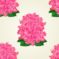 Seamless texture rhododendrons  pink  flowers Mountain shrub vector illustration