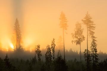 Trees in misty sunrise, Lapland, Finland, Europe