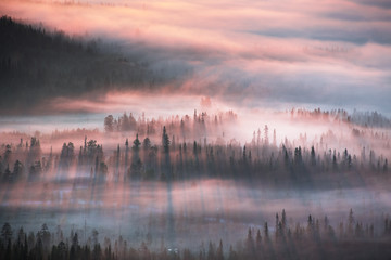 Forest in sunrise mist, Lapland, Finland, Europe