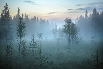 Trees in mist, Lapland, Finland, Europe
