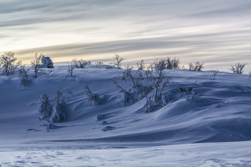 Hill with trees and snow, Lapland, Finland, Europe