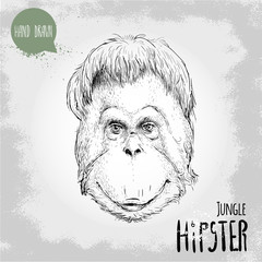 Hand drawn sketch style illustration of monkey face. Jungle Hipster. Chinese zodiac sign. Orangutan. Vector illustration.