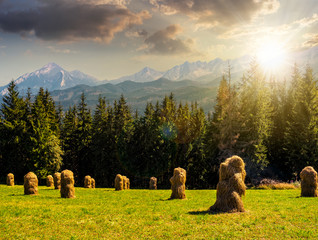 Spruce forest on a meadow in Tatras at sunset
