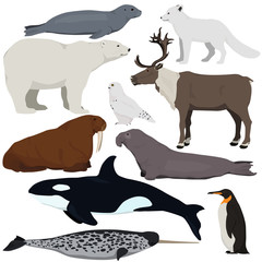 Set of cartoon arctic and antarctic animals. Vector illustration of polar bear, seal, arctic fox, penguin, killer whale, snowy owl, elephant seal, walrus, reindeer, narwhal.