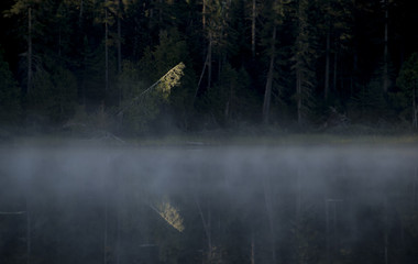 Single pine tree highlighted by early morning sunlight on mist covered lake
