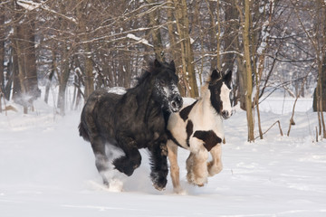 Two horses runnig