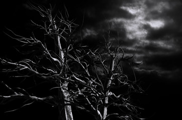 Spooky Tree Dark Night in Black and White