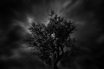 Fototapete - Silhouette of a Bare  Tree in Black and White