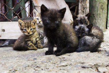 very small colorful kittens