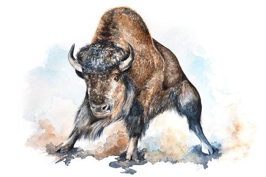 Watercolor bison illustration