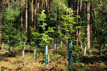 Junge Bäume mit Baumschutz in Schonung