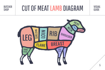 Cut of beef set. Poster Butcher diagram and scheme - Lamb