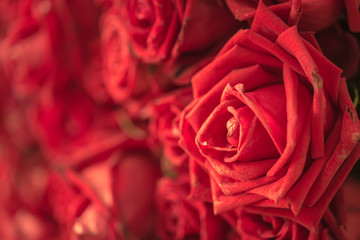 red rose flower for background
