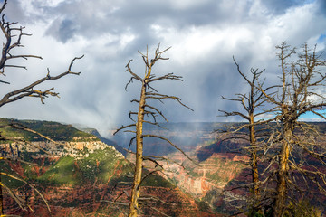 Dead Trees In Front of a Rainstorm in a Grand Canyon Valley