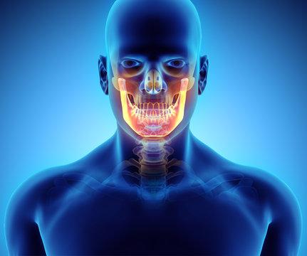3D illustration of Mandible, medical concept.