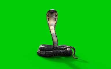 3d King cobra snake isolated on green background, 3d illustration