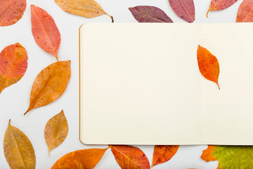 Colorful autumn leaves with open notebook on white background