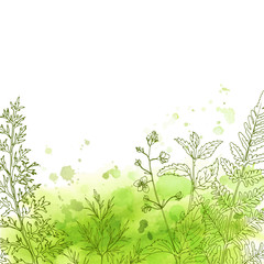 Herbs and flowers painted color line. Space for text. Vector drawing. Abstract watercolor