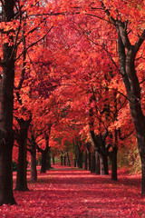 Printed roller blinds Brick nice autumn park