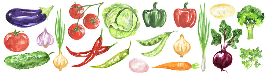 Watercolor vegetables set. Fresh and healthy vegetables on white background. Great source of vitamin. Eggplant, tomato, chili and more.