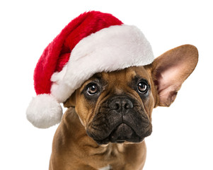 Cute french bulldog with santa claus hat isolated on white background